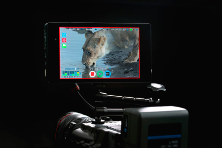 Atomos Shogun 4K Apple ProRes and RAW capable HDMI Monitor/Recorder- Educational